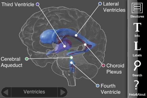 3D brain 2
