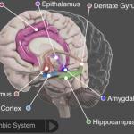 Recensione: 3D Brain