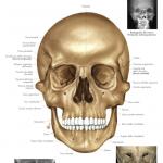 Recensione: da goWare, l'Atlante di Anatomia Umana per iPad in italiano.