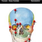Netter Flashcards: le schede di anatomia umana del Netter ora anche in italiano