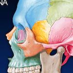 Recensione degli Atlanti di Anatomia Umana Netter e Sobotta per iPad e Android