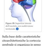 EEG Guide: ebook teorico e pratico sull'elettroencefalografia
