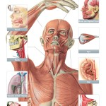 Recensione del Sobotta Anatomy Atlas per iPhone e iPad