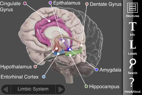 3D brain 3