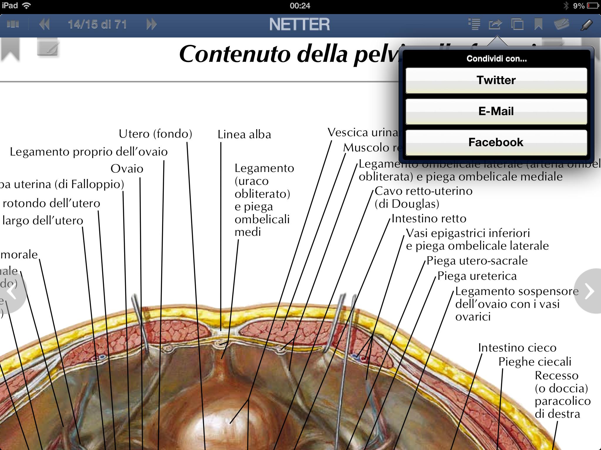 Netter per iPad